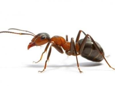 Banbury Pest Control