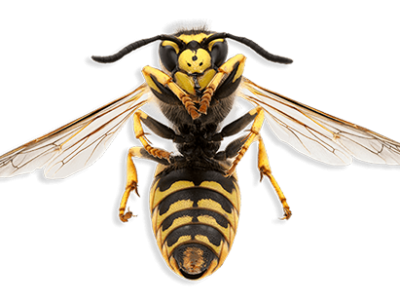 Wasptec - Wasp Nest Removal Leeds