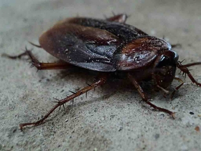 Xpress Pest Control